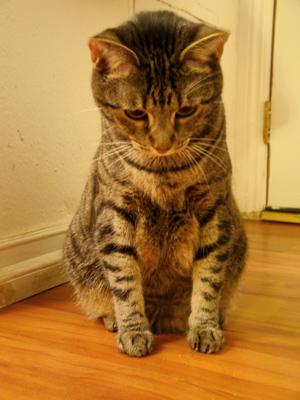 cat8_6_2009_2