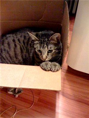 Boxcat1