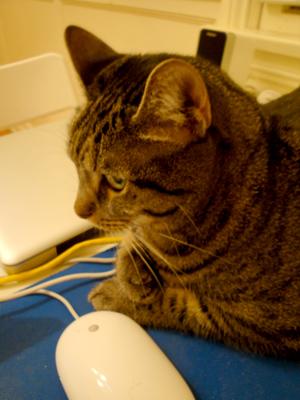 ochoko11_28_2009